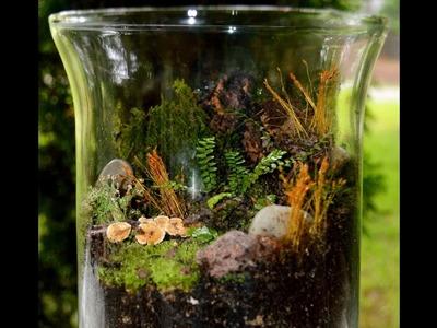 DIY Miniature Garden Personal Rain Forest