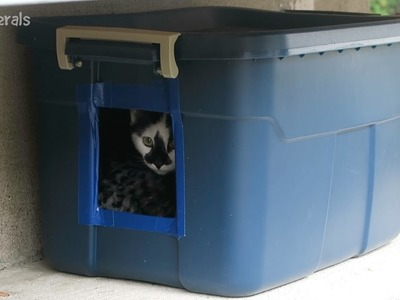 Making Another DIY Feral Cat Shelter For Outdoor Cats