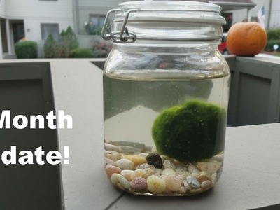 Sealed Terrarium 3 Month Update: DIY Biosphere Ecosphere How To