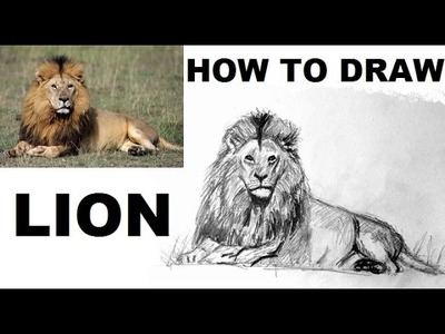How to Draw a LION Easy