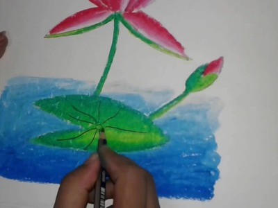 Drawing tutorial:How to draw a  waterlily for the beginner.