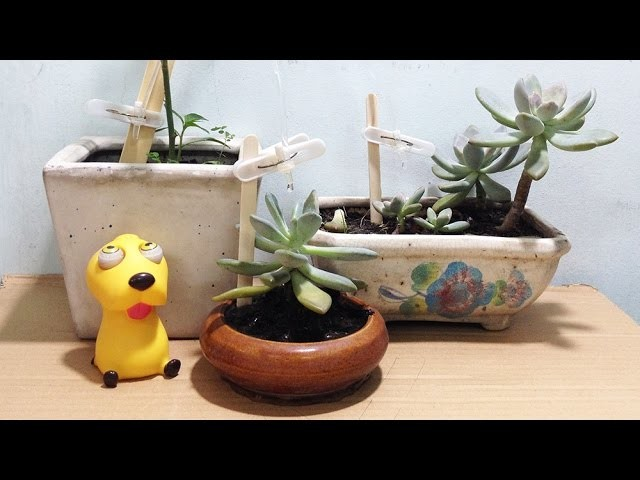 Homemade - How to Water Plants Automatic -  Plastic bottle life hacks