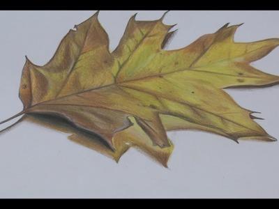 How to draw a realistic leaf | Haji Draws
