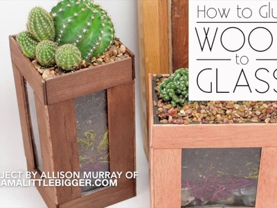 How to Glue Wood to Glass: DIY Terrariums