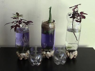 DIY Aquaponics planters of plastic bottle