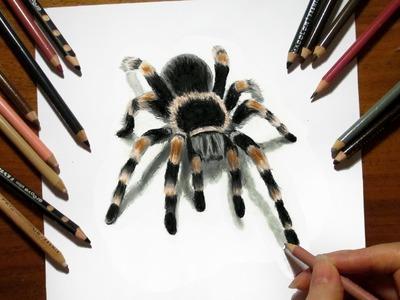 3D Drawing Tarantula Spider in Colored Pencil - Speed Draw   Jasmina Susak