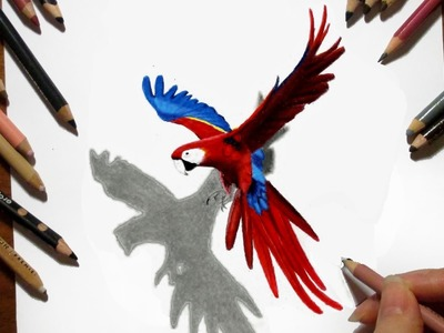 Time Lapse 3D Drawing: Flying Parrot