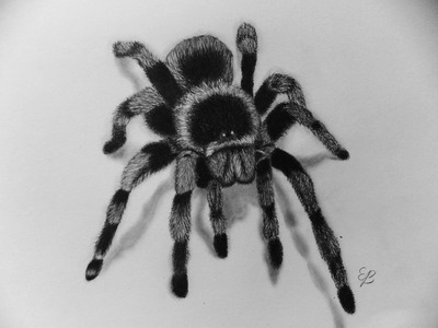 How To Draw A Spider Step By Step-3D Illusion