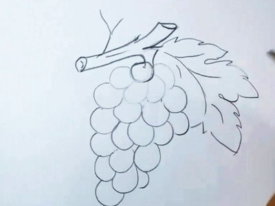 How to Draw Grapes Easy and Step By Step