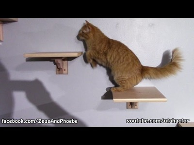 DIY Custom Cat Shelf & Stairs