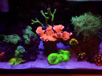 DIY LED Light Diffuser & DIY Nano Protein Skimmer - 10 Gallon Reef Tank Update