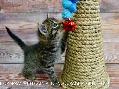 DIY CAT SCRATCHER TOY