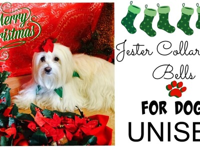 DIY Jester Christmas Collar for Dogs UNISEX Coton de tulear I Lorentix