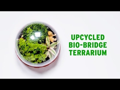 How To: Make your own Terrarium - The Body Shop