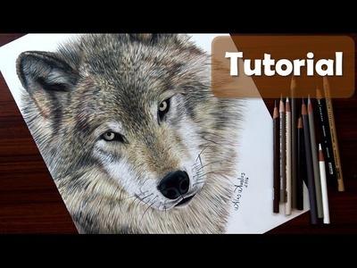 Cómo dibujar un lobo - Cómo dibujar pelo de animal - How to draw a Wolf