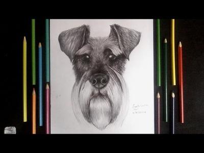Dibujando un perro schnauzer a lapiz y boligrafo  - Drawing a dog schanuzer | HD