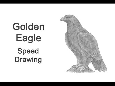 Golden Eagle Time-lapse (Speed) Drawing