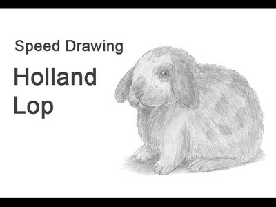 Holland Lop Bunny Time-lapse (Speed) Drawing