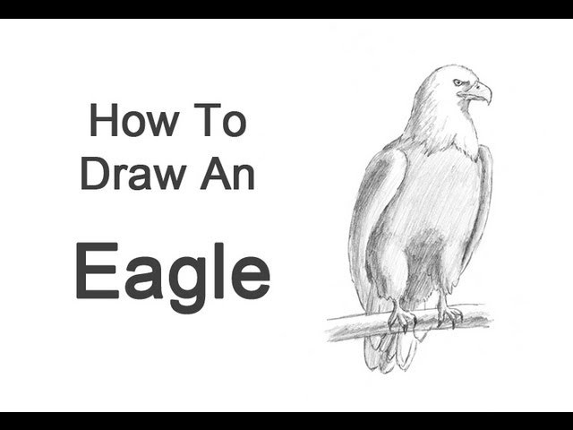 how to draw a cute bald eagle
