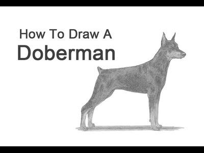 How to Draw a Dog (Doberman Pinscher)