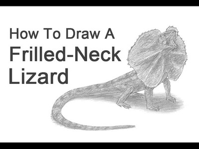 How to Draw a Frilled-Neck Lizard