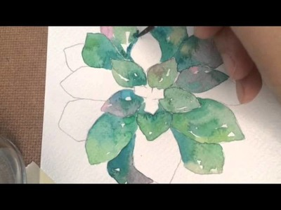 How I draw and paint Hen and Chicks