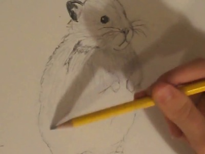 How To Draw A Hamster!
