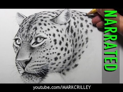 How to Draw a Leopard [Narrated, Step by Step]