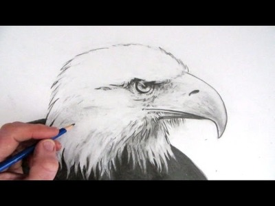 How to Draw an Eagle's Head Narrated Step by Step