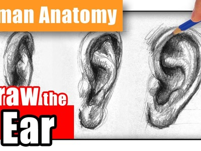 How to Draw the Ear the Easy Way - Different Angles