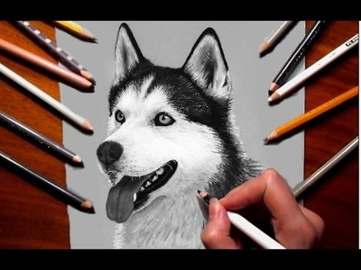Pencil Drawing: Siberian Husky - Speed Draw   Jasmina Susak