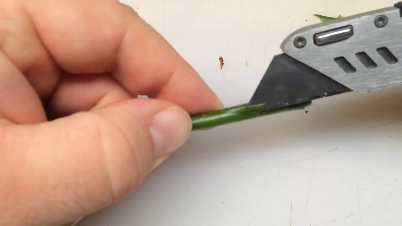 Grafting How to Growing Roses from Stem Budding | Rooting | Cutting | Gardening Landscaping Flowers
