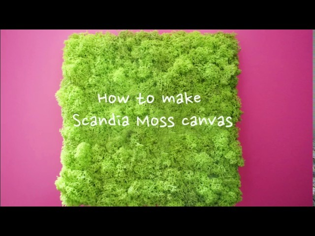KklassyFlower:: How to make Scandia Moss canvas