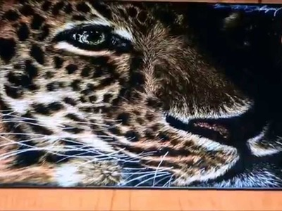 Leopard Scratchboard Speed Drawing