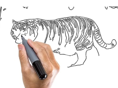 How To Draw a Tiger   Tiger Drawing Easy Tutorial 2016