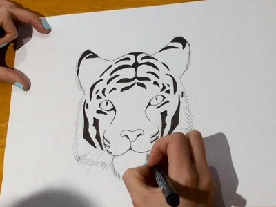 how to draw a tiger for beginners
