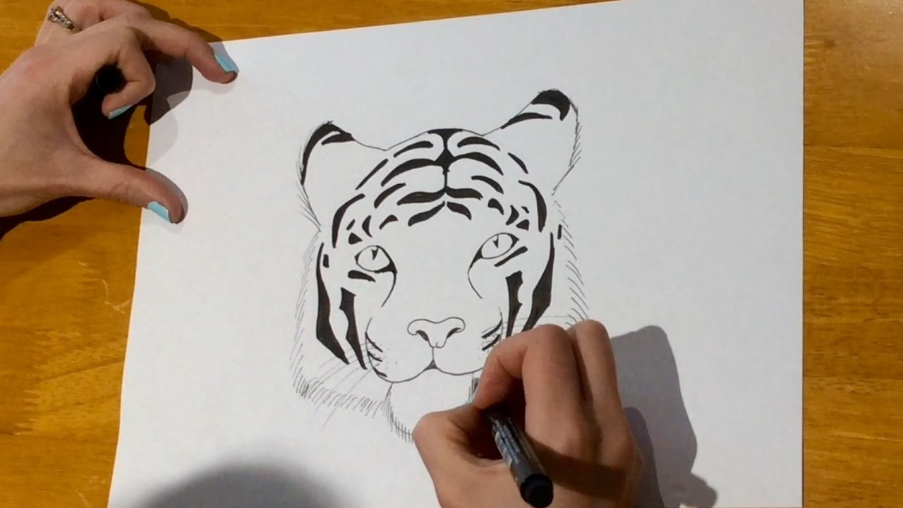 Beginners - How to draw a tiger