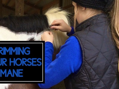 How to Trim Your Horses Mane