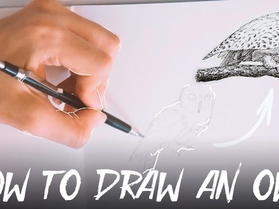 How To Draw a Hedwig Owl (from Harry Potter) | Tutorial