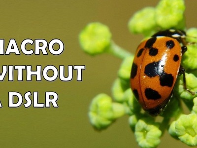 How to take macro photos without a DSLR (cheap, simple, no jargon)