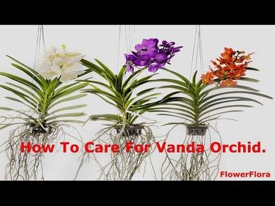 How To Care For Vanda Orchids-Watering,Fertilizing,Lighting,Potting Vanda Orchid