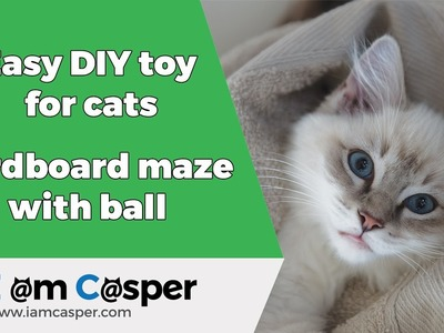 Easy to make DIY toy for cat - play box maze with ball