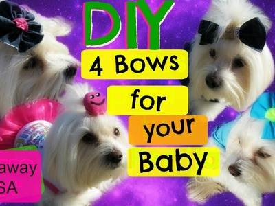 """GIVEAWAY"" DIY 4 bows for your dog, Coton de tulear I Lorentix"