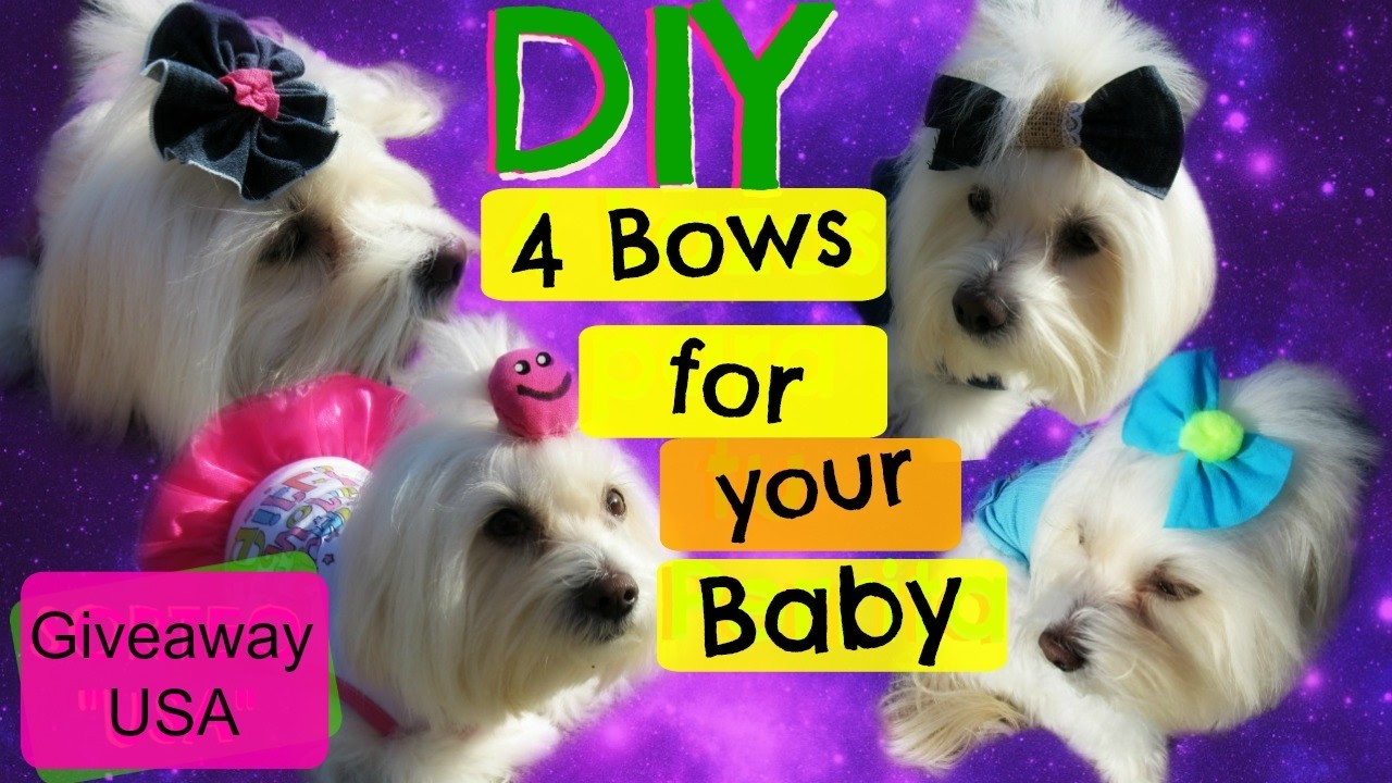 """GIVEAWAY"" DIY 4 bows for your dog, Coton de tulear I Lorentix"