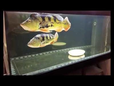 My first DIY 700l aquarium step by step. Part 5 - Finish