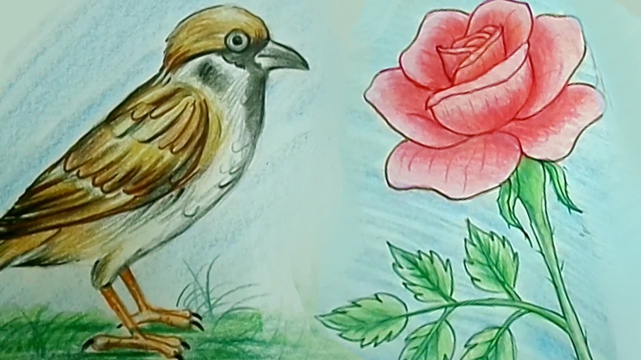 How To Draw Rose Flower Tweet Bird Step By Step Kids Drawing
