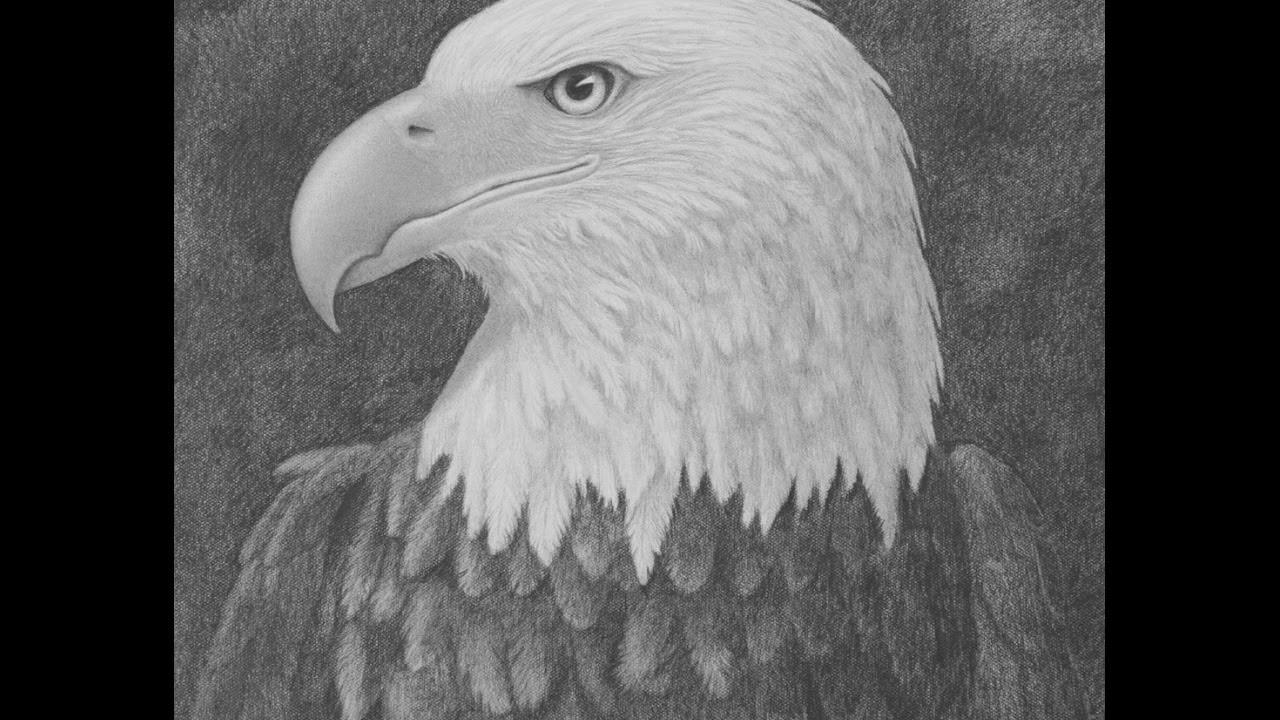 How to draw a bald eagle head with pencil narrated