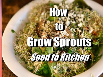 The Easiest Way to Grow Sprouts! How to Grow Sprouts | THE INDOOR GARDEN