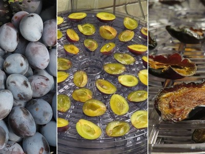 How to Make Dried Plums in a Food Dehydrator - A Quick Tutorial with Easy-to-follow Steps