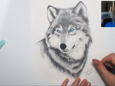 Drawing a Winter Wolf (Pencil Crayons & Markers) Part 2